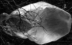 Plast i ett träd
