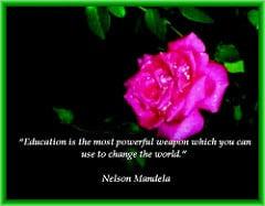 Ros och text: utbildning mest kraftfullt vapen för att förändra världen (Mandela)